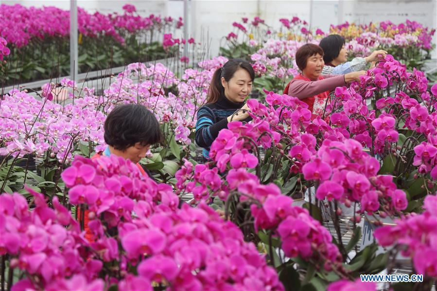 Shangdang Township's Burgeoning Flower Industry Helps Women